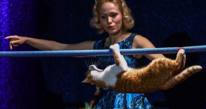 Teatr Kotów w Moskwie