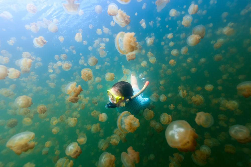 Jellyfish Lake – jezioro słone na wyspie Eil Malk