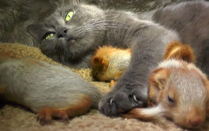 Kotka i wiewiórki