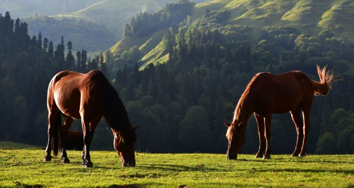 Pasące się konie w Reliktowym Parku Narodowym w Abchazji