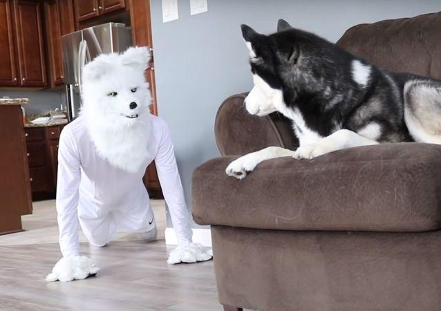 Właściciel nastraszył psy