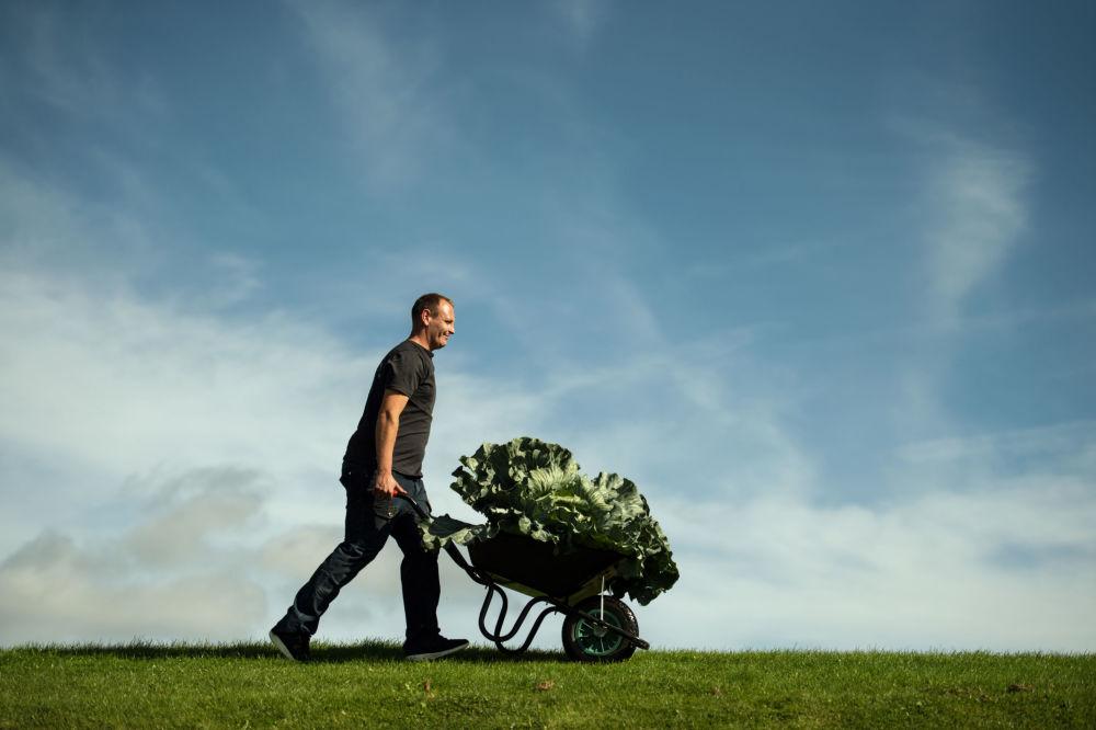 Rolnik Craig Pearson ze swoją gigantyczną kapustą o wadze 27.4 kg