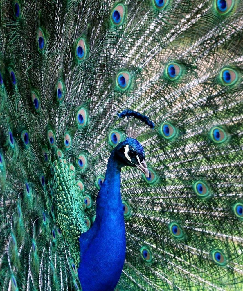 """Zdjęcie """"Blue2019"""". Wykonała je fotograf z Niemiec Lindita Fanaj w ramach konkursu fotograficznego World's Best Photos of #Blue2019"""