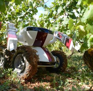 Robot w winnicy we Francji