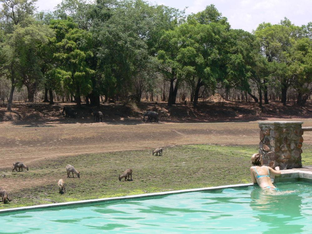 Hotel Mfuwe Lodge w Zambii