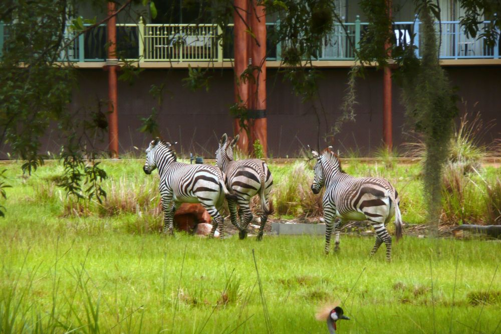 Hotel Disney's Animal Kingdom Lodge w USA