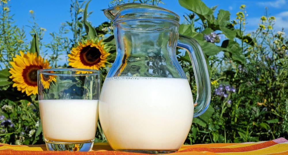 Dzbanek z mlekiem na tle słoneczników
