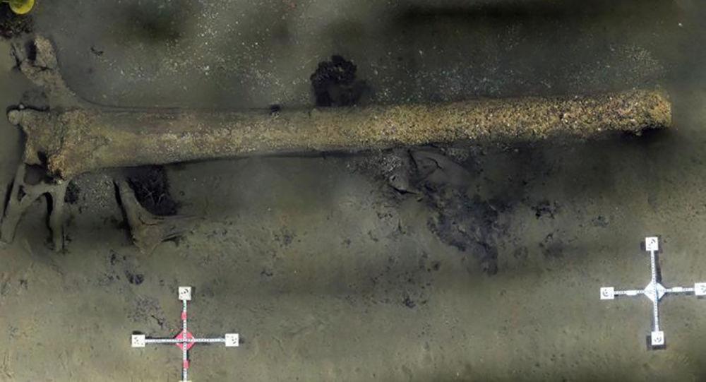 Ślady lasu z czasów epoki lodowcowej znaleziono w pobliżu Kłajpedy na Litwie, na dnie Bałtyku