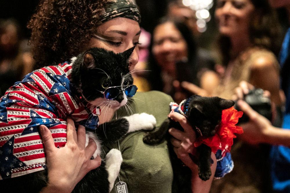 Kot Balboo i Figaro podczas pokazu mody Algonquin Hotel's Annual Cat Fashion Show w Nowym Jorku