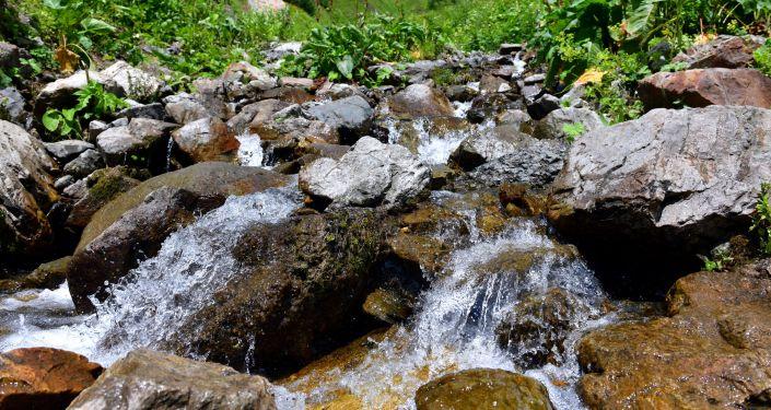 Rzeka górska w Reliktowym Parku Narodowym w Abchazji