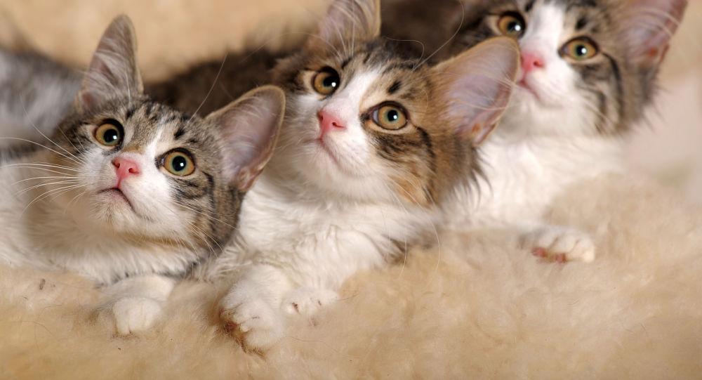 Trzy kocięta
