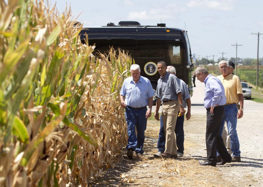 Barack Obama w polu kukurydzy