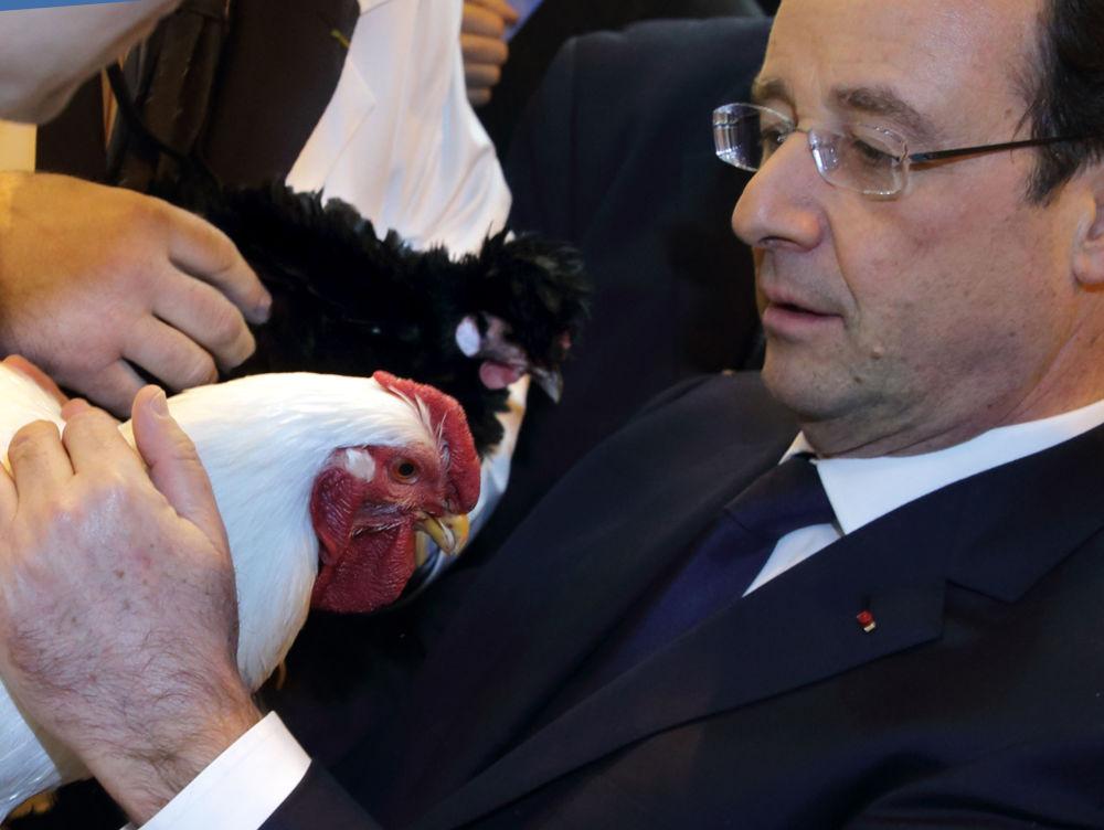 Prezydent Francji François Hollande podczas rolniczych w Paryżu