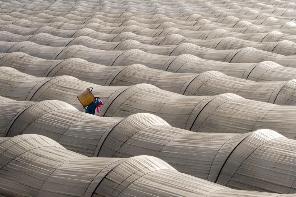 """Zdjęcie """"Strawberry greenhouses"""" tureckiego fotografa Leyla Emektara na konkursie fotograficznym AGORA Awards 2019."""