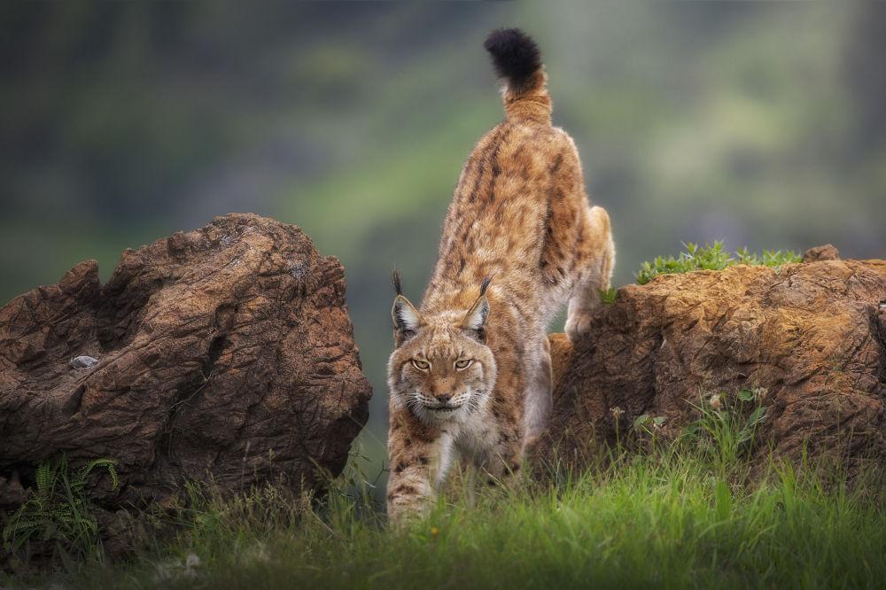 """Zdjęcie """"Wild look"""" hiszpańskiego fotografa Sergio Saavedra na konkursie fotograficznym AGORA Awards 2019."""
