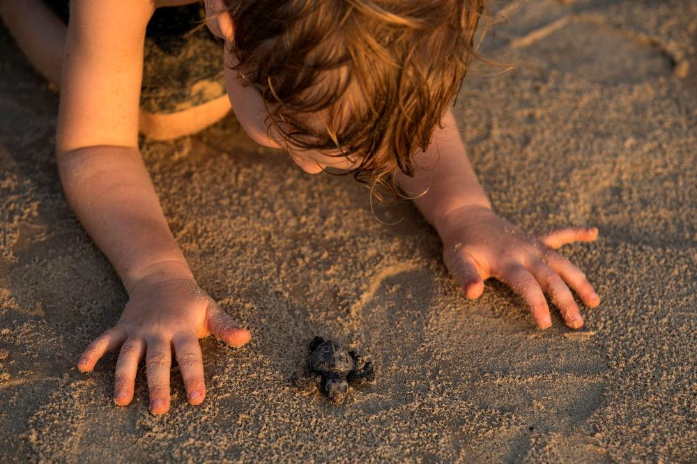 Młody żółw morski w izraelskim Centrum Ratowania Żółwi Morskich w Tel Awiwie.