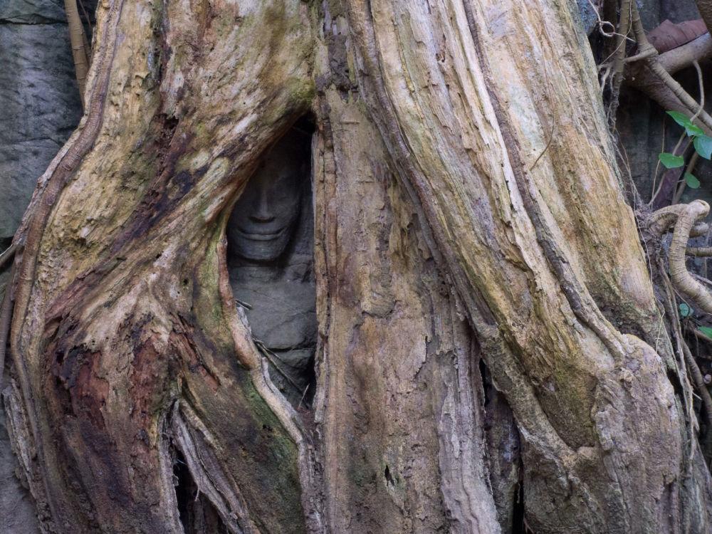 Posąg wyglądający z dziupli w Kambodży