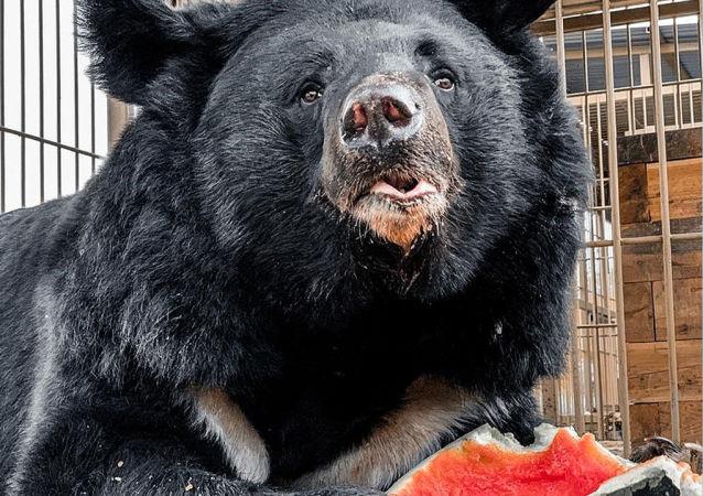 Wolność dla niedźwiedzi