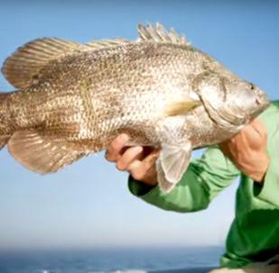 Ryba, którą złowiono w USA