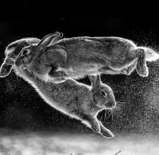 Jump!. Fotograf: Csaba Daróczi (Węgry)