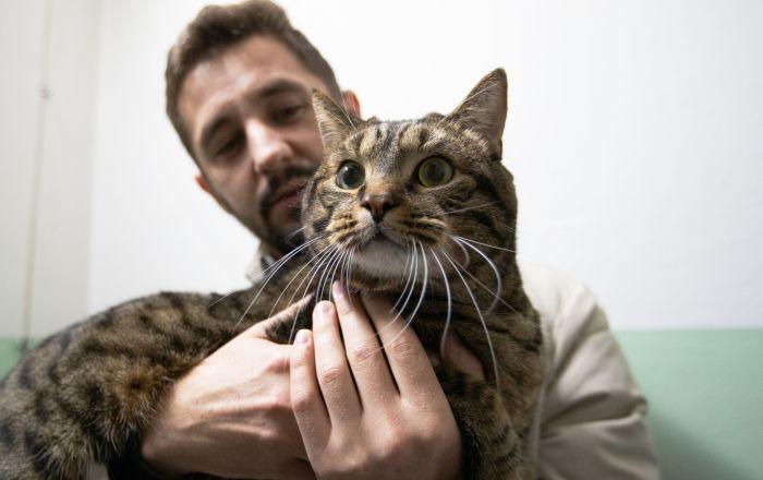 Kot Wiktor, który był zbyt gruby, żeby lecieć liniami Aeroflot. Jego właściciela nie wpuszczono do samolotu, żądając umieszczenia zwierzaka w luku bagażowym.