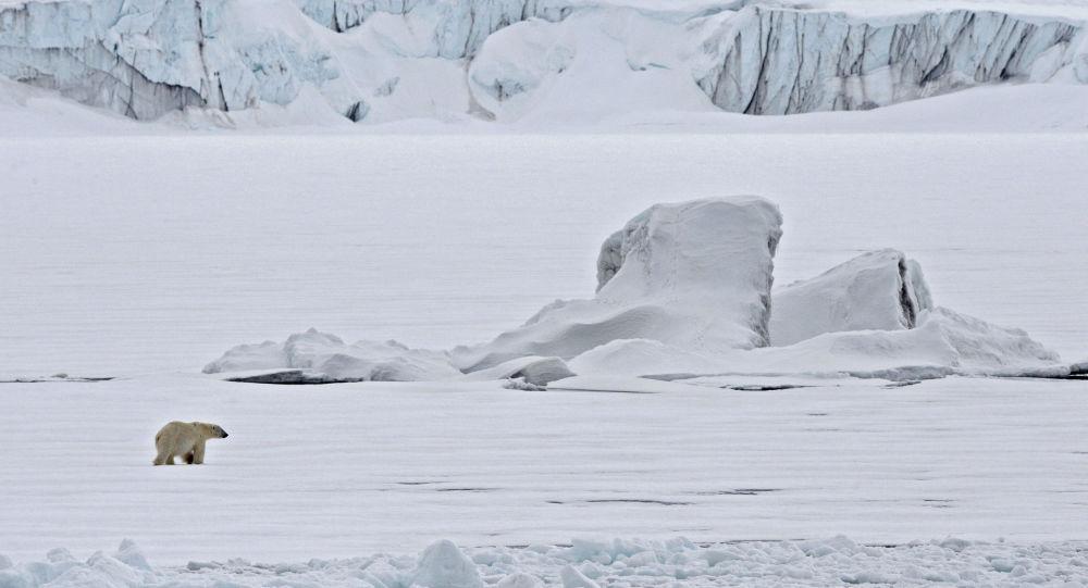 Biały niedźwiedź na krze na Oceanie Arktycznym