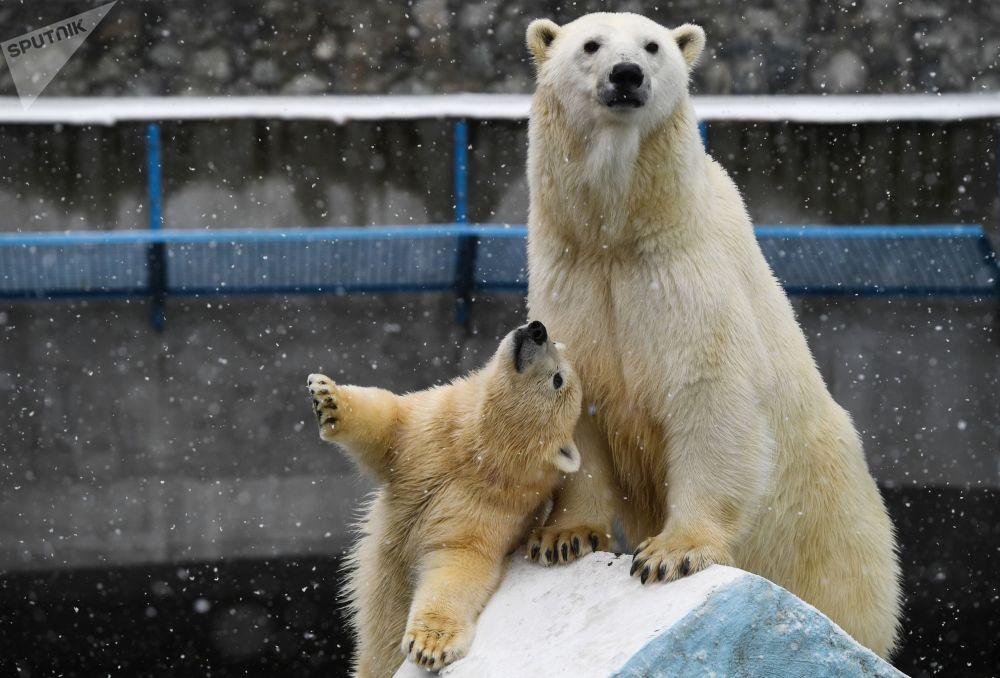 Zoo w Nowosybirsku