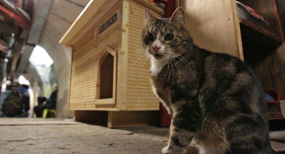 Kot w Ermitażu