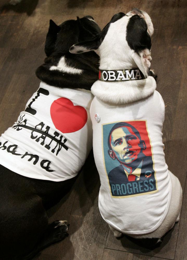 Psy w koszulkach ze zdjęciami Baracka Obamy