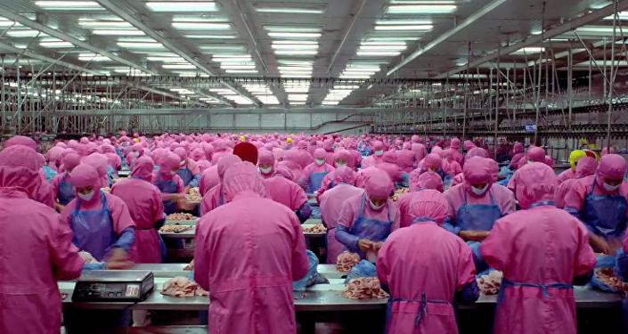 Odcinek filmu Samsara o mięsie