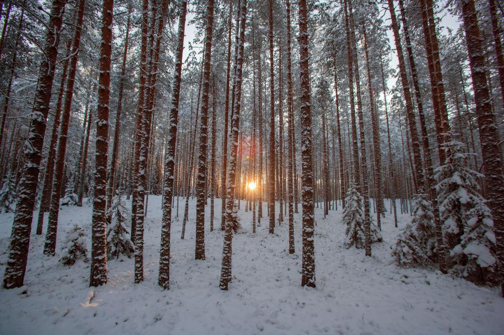 Zimowy las na terenie kompleksu turystycznego Karjala Park, Karelia