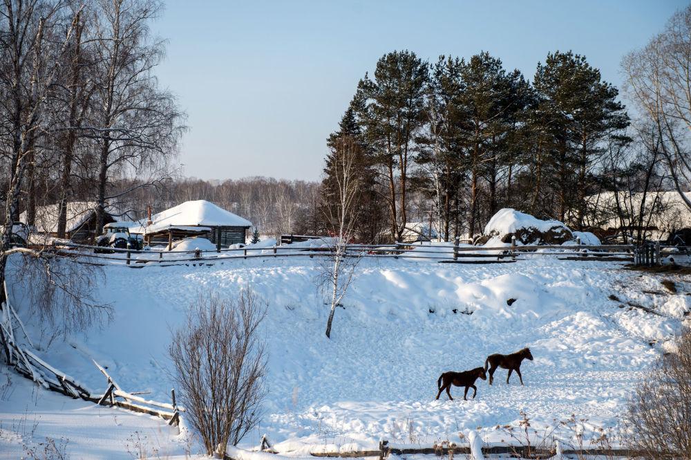 Zima na wsi Maszanka dzielnicy Tarskiej