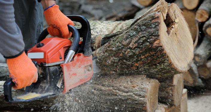 Wyrąb drzew