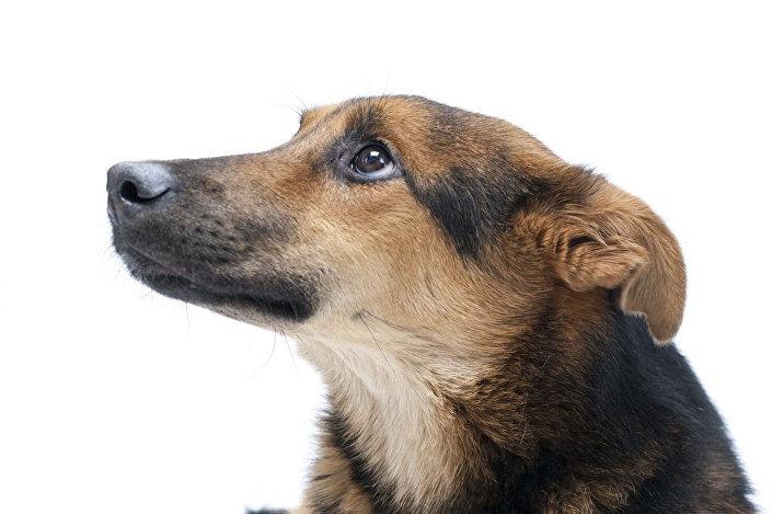 Pies inwalida o imieniu Szans.