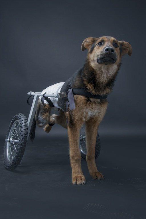 Większość niepełnosprawnych zwierząt jest usypiana, ponieważ właściciele nie wiedzą, co robić w takiej sytuacji i jak pomóc zwierzęciu.
