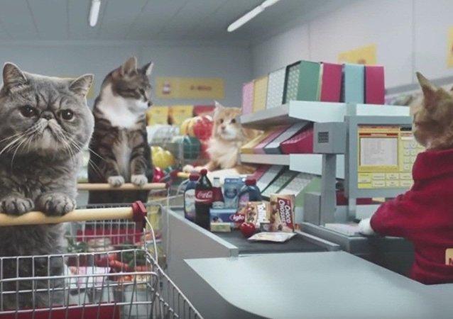 Koty w supermarkecie