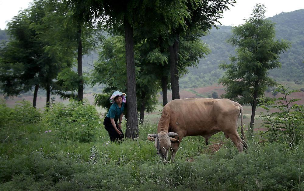 Z powodu tego, że w kraju brakuje urodzajnej ziemi, rolnictwo jest słabo rozwinięte. Głównie sadzi się tu ryż, ziemniaki, soję i kukurydzę. Hoduje się trzodę chlewną i drób.