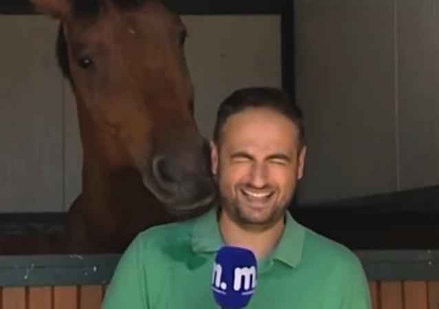 Koń przeszkodził pracy reportera.