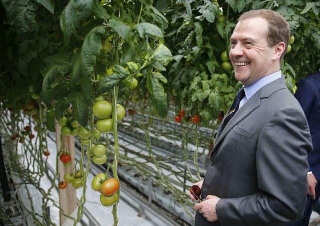 Dmitrij Miedwiediew w czasie wizytacji przedsiębiorstwa rolnego Matwiejewskojoe w obwodzie moskiewskim