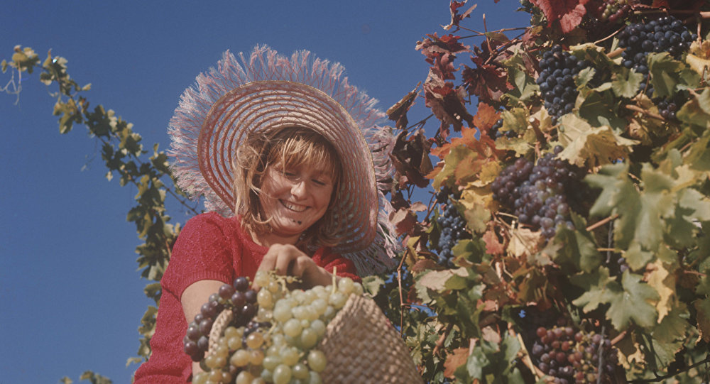 Zbiór winogron.