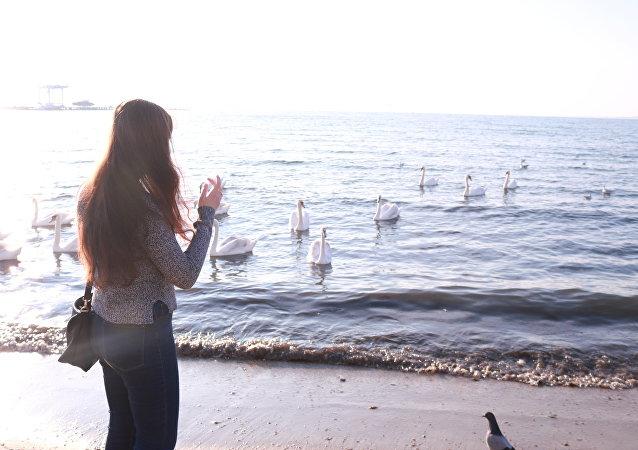 Morze Czarne w Anapie. Łabędzie przylatują o tej samej porze, by turyści ich nakarmili, a potem odlatują na spoczynek.