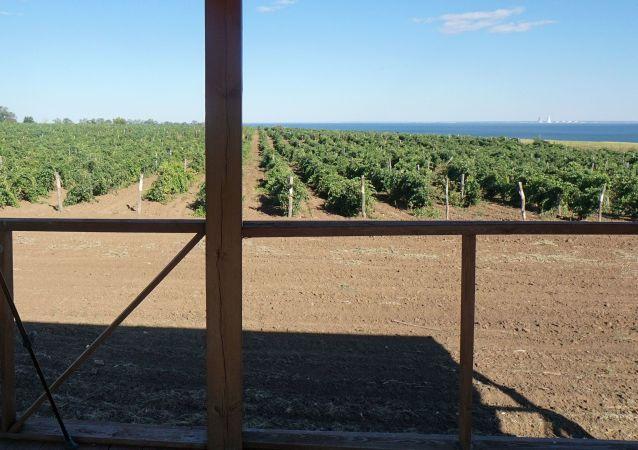 Winnice w Rosji