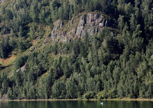 Tajga nad rzeką Jenisej