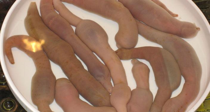 Robaki-penisy