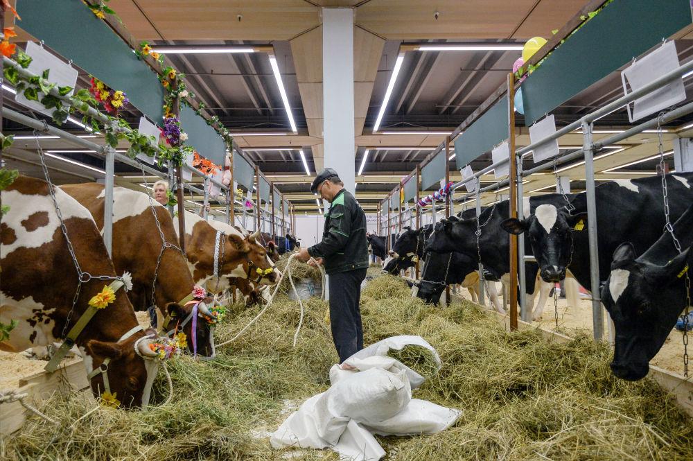 Podczas wystawy zostało podpisane porozumienie o budowie mleczarni wartej 2 mld rubli w piesczanokopskim rejonie obwodu rostowskiego.