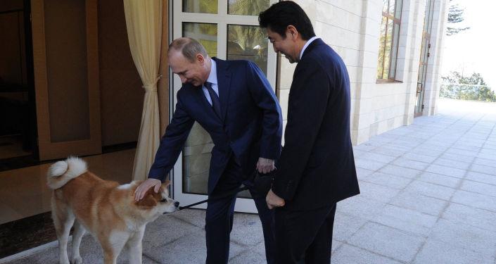 Władimir Putin i Shinzō Abe wraz z psem Jume rasy akito-inu