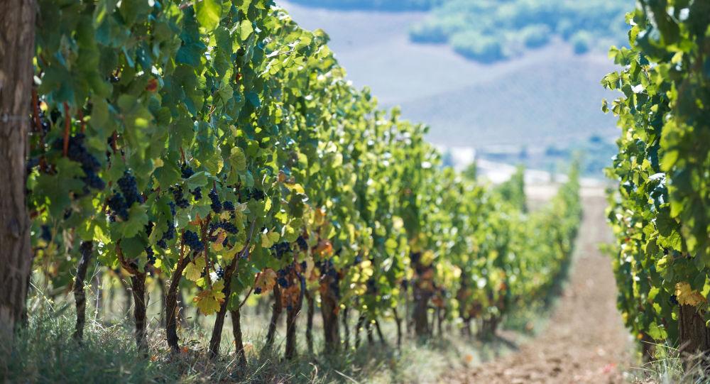 Gospodarstwo winiarskie UPPA Winery na Krymie