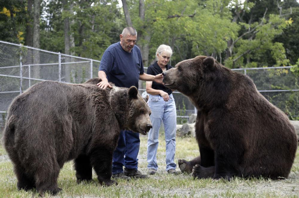 Pracownicy opiekują się niedźwiedziami w schronisku dla osieroconych dzikich zwierząt w Otisville, w stanie Nowy Jork, USA