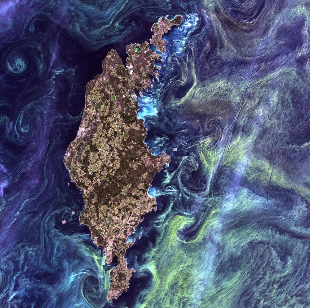 Ogromne skupiska fitoplanktonu w ciemnych wodach wokół wyspy Gotlandia na Morzu Bałtyckim.