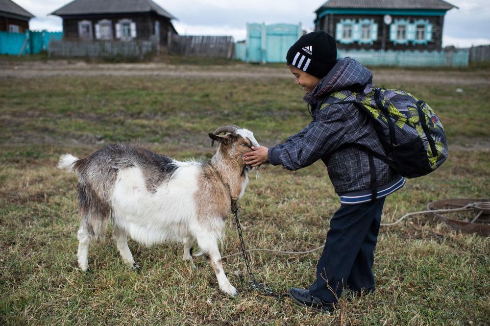 Ajdar bawi się z kozą po zajęciach w szkole
